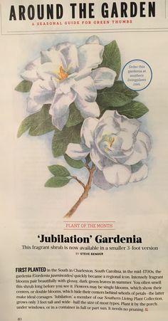 Jubilation Gardenia Medicinal Herbs ba7f7085226c2