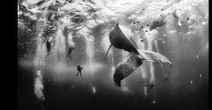 Uma foto de mergulhadores nadando com uma baleia-jubarte e seu filhote ganhou o grande prêmio do concurso de fotos de viagem da National Geographic. A foto vencedora, de Anuar Patjane Floriuk, foi tirada perto de Roca Partida, uma ilha na costa oeste do México, e superou mais de 17 mil inscritas