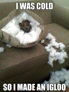 too cute. my dog would do this
