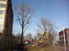 Boom sneuvelt aan de Westlandsestraat in Delft