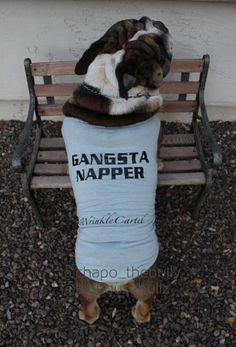 Chapo (the founder of #wrinklecartel) showin' off his new shirt. I love gangsta nappers!   Follow us on IG @chapo_thebully_  @bighousebullz