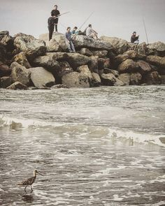 Morning fishing #santamonica #beach #insta_losangeles #losangeles_city #losangeles #california #ca #la #fishing #ocean #venicebeach #venice #natgeo #natgeoru #natgeorussia #conquer_la #natgeoyourshot #nature #discoverla #LAstory #los_angeles #moodygrams #latimes  #justgoshoot #streetphoto #streetphotography #streetshot #folk #folkmagazine #losangeles_la by tatianasyunyaeva