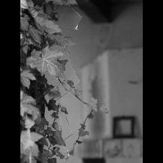 @autumnleaf66 ///