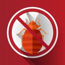 Paying for a Bed Bug Exterminator Unfortunately, bed bugs are…