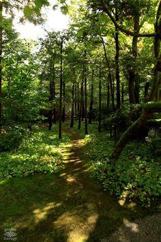Moving through the winding paths #gardentherapy #forestbathing #gardentour #japanesegarden #nitobe