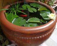 A large pot with fish and water lilies. I've had the pot for several years...just now added a peach colored lily and fish.  It delights me every time I look at it. Love it!!