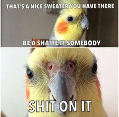 Shame if....
