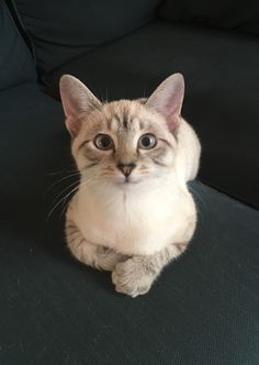 My ridiculously photogenic cat. (X-post from r/animals) via Classy Bro
