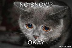 no more snow cat