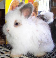 Cute little rabbits!