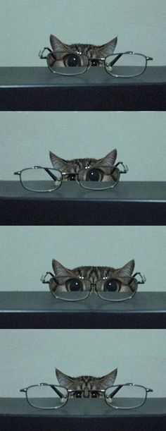 Cat In Glasses Isn't Kitten Around // funny pictures - funny photos - funny images - funny pics - funny quotes - #lol #humor #funnypictures