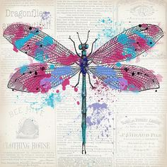 I uploaded new artwork to plout-gallery.artistwebsites.com! - 'Dragonfly On Newsprint-jp3453' - http://plout-gallery.artistwebsites.com/featured/dragonfly-on-newsprint-jp3453-jean-plout.html