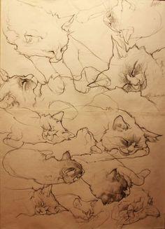étude de chat