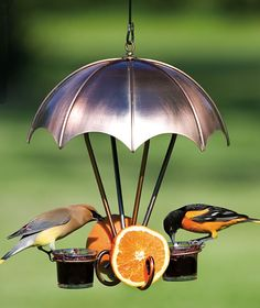 Woodlink, Brushed Copper Oriole Bird Feeder comes ready to hang with 2 jelly dishes and 2 fruit holders available for sale online with other great wild bird feeders. Oriole Bird Feeders, Humming Bird Feeders, Love Birds, Beautiful Birds, Loro Animal, Diy Jardin, Parasols, Backyard Birds, Wild Birds