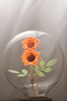 As lâmpadas da Aerolux com pequenas esculturas fluorescentes de flores e pássaros dentro fazem qualquer lâmpada de LED da atualidade parecer sem graça.