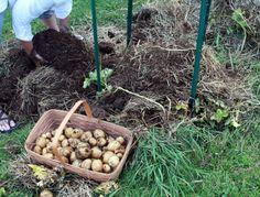 Coloca Um Saco De Batatas Em Uma Cesta De Palha: Veja O Pequemo Truque Que Te Faz Economizar