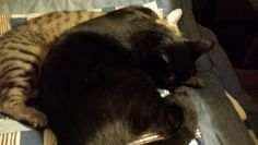 My boys black and Tiger