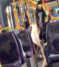 Spotted in Dublin, Ireland: horse seen casually riding the Luas light rail tram system