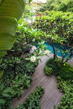 Tropical Garden Design, Home Garden Design, Tropical Houses, Courtyard Landscaping, Tropical Landscaping, Garden Swimming Pool, Jungle Gardens, Estilo Tropical, Corner Garden