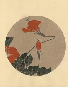 hoodoothatvoodoo: Ito Jakuchu 'Hibiscus' 1930s