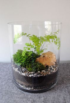 Available for sale at duoma-la  http://duoma-la.com/garden-in-a-glass.html