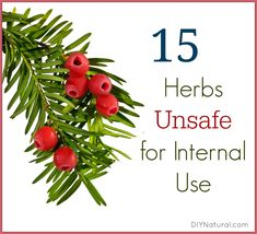 This partial list of herbs are considered UNsafe to use internally. Some have external applications, but ingestion is dangerous. Read descriptions carefully.