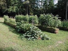 A few years ago I had about 40 straw bales hanging around from a straw bale wall project that never did happen. I decided to build a series of raised beds with them for my garden. I set up beds that were 4 bales long and 1 bale wide - then filled the