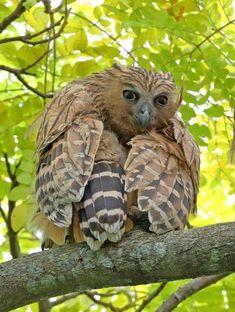 For owl lovers everywhere. Beautiful Owl, Animals Beautiful, Cute Animals, Owl Photos, Owl Pictures, Photo Animaliere, Owl Bird, Pretty Birds, Nocturne