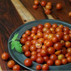 tomate cherry verano
