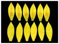 Tutorial Bunga Lily bertangkai dari flanel.