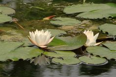How to Build Small Fish Ponds