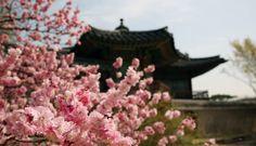 Primavera em Seul, Coreia do Sul