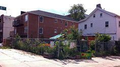 Cornell University Alumna built a local composting community in Brooklyn.