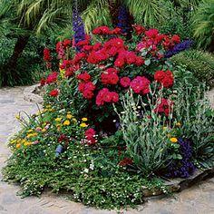 Patio cottage garden