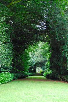 Walking Down the Avenue at Rousham Park