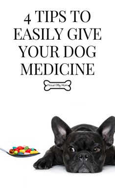 Cat Care Health 4 Tips To Easily Give Your Dog Medicine Cat Health Care, Dog Health Tips, Puppy Care, Dog Care, Dog Grooming Tips, Kitten Care, Cat Care Tips, Pet Tips, Dog Hacks