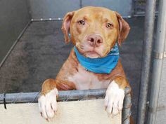 arlo SUPER URGENT 2 BE DESTROYED TONIGHT 8/1/15! PLSE LIKE N REPIN TO SAVE THEIR LIVES! I DONT WANT TO DIE, WONT U HELP ME? WE R ARLOS ONLY VOICE N HOPE FOR SURVIVAL, WONT U HELP HIM? THEY ONLY HAVE HOURS TO BE SAVED FROM THIS DREADFUL DEATH CAMP! CHOOSE LIFE, NOT DEATH!!!