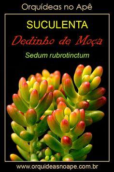 Cactus Y Suculentas, Sugar Flowers, Garden Design, Flora, Succulents, Green, Plants, Plant Identification, About Plants