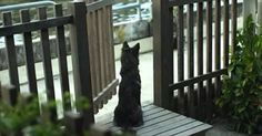 This Dog Barks At Her Everyday, But Then The Unexpected Happened! | Just Mans Best Friend For Life
