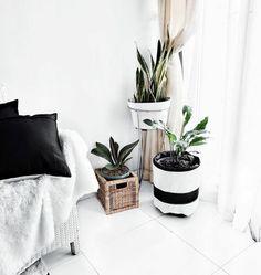 F L A U N T ☆ #indoorplants #interiordesign