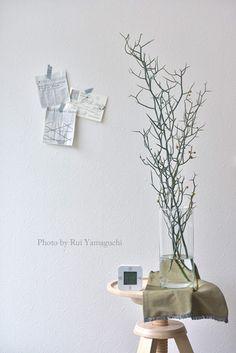 ナチュラル生活ブログ、珍しい枝もののご紹介|写真で思い出溢れる暮らし- 福岡のフォトスタイリング&写真教室 Petit Works-プチワークス-