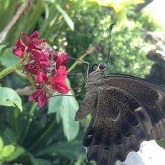 #butterfly #Bali #Indonesia