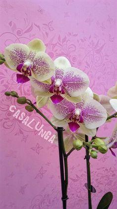 Orchidea vivaio montecchio emilia