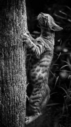 Crazy Cat Lady, Crazy Cats, Cute Cats, Funny Cats, Animals And Pets, Cute Animals, Lots Of Cats, Photo Chat, Cat Photography