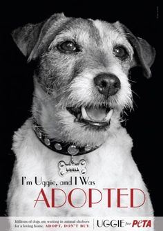 uggie adoption poster for peta Animal Shelter, Animal Rescue, I Love Dogs, Cute Dogs, Big Dogs, Parson Russell Terrier, Famous Dogs, Jack Russells, Dog Modeling
