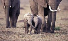 The most adorable baby elephants