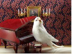 how adorable!!! If only we can get our hands on tiny furniture! and can Parakeets pose? haha