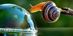 Incredible snail photos reveal the secret life of our mollusk friends. Funny Animal Pictures, Funny Animals, Cool Pictures, Cute Animals, Amazing Photos, Animal Photography, Nature Photography, Scenic Photography, Spirals In Nature