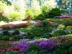 Visited the National Rhododendron Gardens in mid October the prime time for the beautiful blossoms to be out. Description from tripadvisor.com.au. I searched for this on bing.com/images