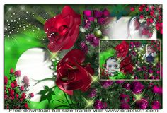 Image: Garden Flowers and Pearls Colorful Frame